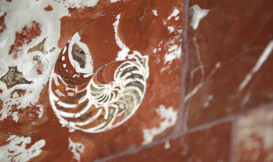 Moscow-metro-ancient-fossils